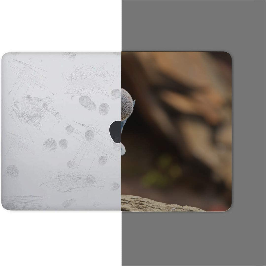 MacBook Pro Case Blue Footed Booby Nice Feet Coloring MacBook Air 13 A1932 Plastic Case Keyboard Cover /& Screen Protector /& Keyboard Cleani Touch ID