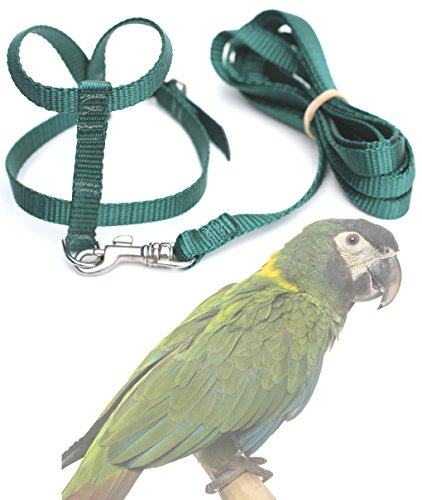 fred-bird-harness-with-6-foot-leash-for-mini-macaws-timneh-grey-parrots-large-conures-goffins-cockat