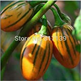 New Home Garden Plant 10 Seeds Solanum Aethiopicum African Eggplant Vegetable Seeds