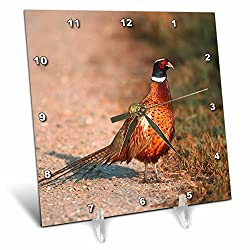 3dRose Danita Delimont - Birds - Ring necked pheasant on a country road, Sacramento NWR, California - 6x6 Desk Clock (dc_258875_1)