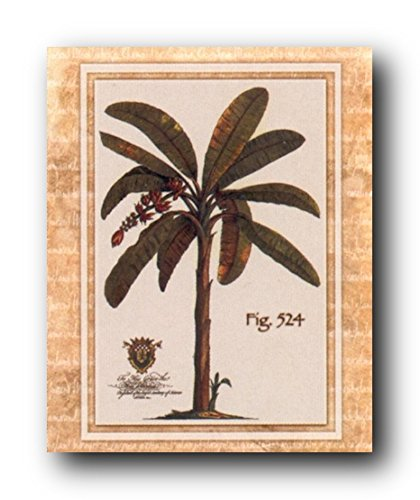 Vintage Palm Tree Fig 524 Tropical Wall Decor Fine Art Print Poster (24x36)