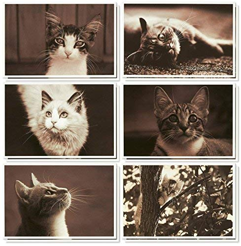 36 Pack Blank Note Cards - All Occasion Assorted Real Photograph Cat Images - with White Paper Envelopes Included 4 x 6 Inches
