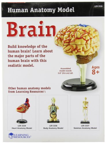 51NSUxaxzVL - Learning Resources Brain Model