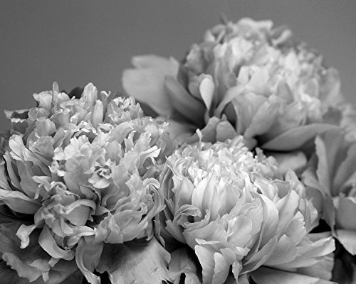 Black and white photography print peony wall art modern flower artwork floral art
