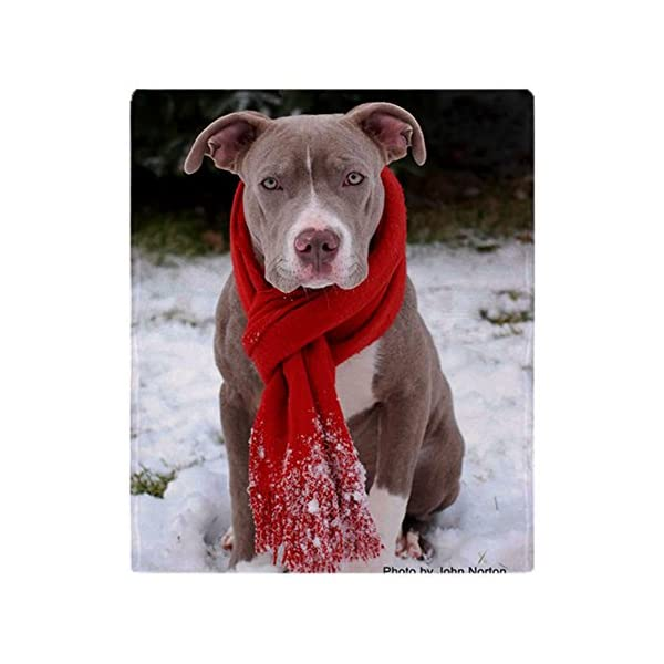 CafePress-Holiday Pit Bull with Red Scarf-Soft Fleece Throw Blanket 1