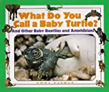 img - for What Do You Call a Baby - Turtle? And Other Baby Reptiles and Amphibians book / textbook / text book
