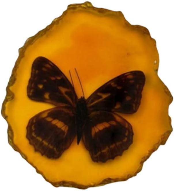 BESPORTBLE Encanto Ámbar Inclusión de Insectos Muestra de Ámbar Colgante Mariposa Escorpiones Insectos para Amigos Collar de Bricolaje Decoraciones Suéter (Mariposa)