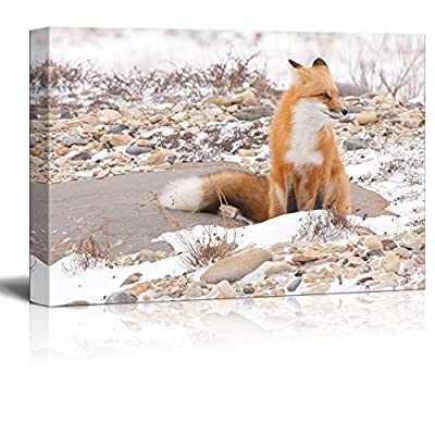 Wild Fox In The Snow - Canvas Art