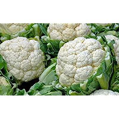 Cauliflower Seed, Snowball Y, Heirloom, Organic, Non GMO, 100 Seeds, Large, Delicious and Healthy : Garden & Outdoor
