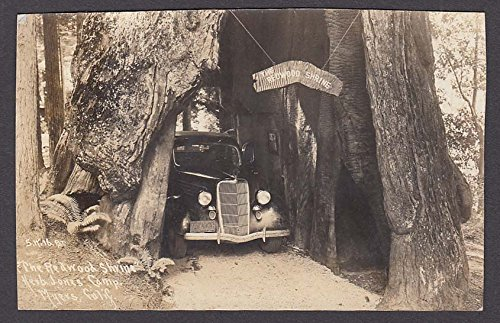 1935 Ford at The Redwood Shrine Herb Jones Camp Myers CA RPPC postcard 1930s