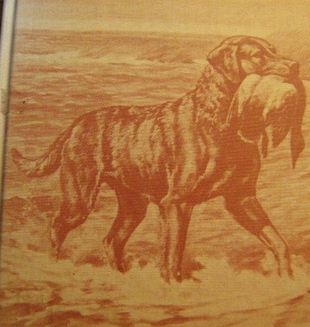 A History of the Chesapeake Bay Retrievers