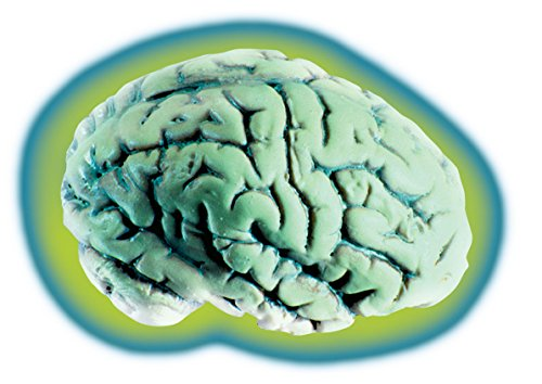 Loftus Glowing Alien Brain Halloween Decoration Prop Green -