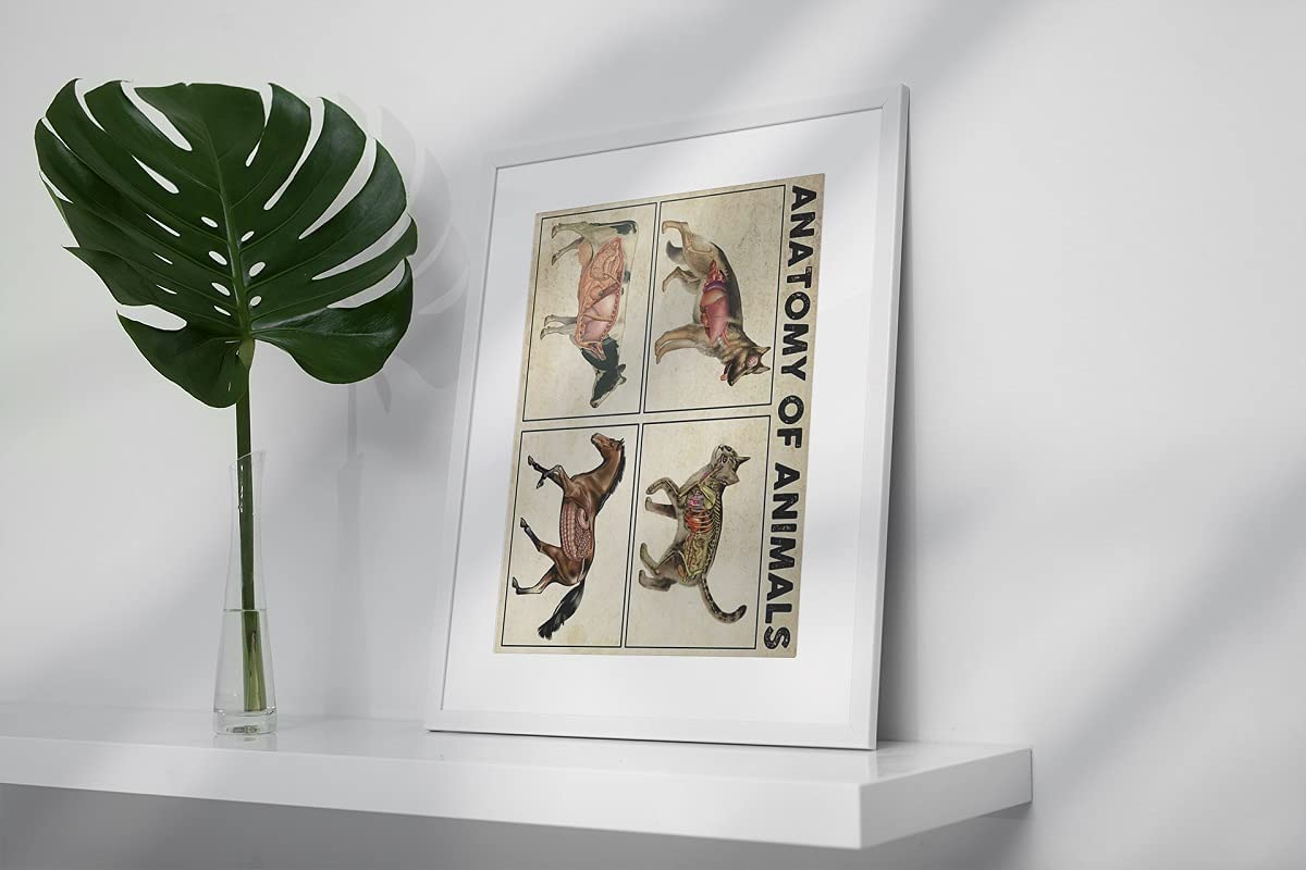 Anatomy of animals poster full size - Frameless