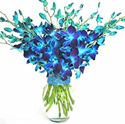 Just Orchids - 20 Blue Dendrobium Orchids with Vase w/ Rhinestone Mesh Ribbon
