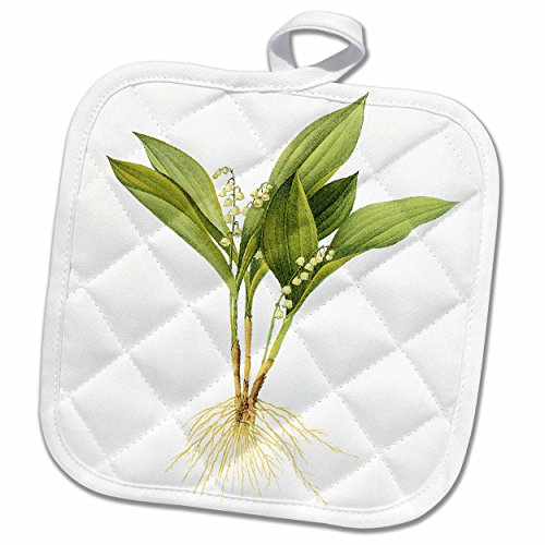 Amazon For 3d Rose Redoute Vintage Watercolor Floral Lilly Of The Valley Convallaria Majalis Pot Holder 8 X 8 Ibt Shop