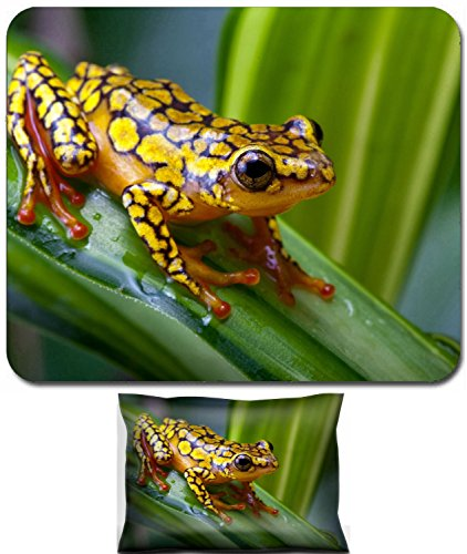 (Liili Mouse Wrist Rest and Small Mousepad Set, 2pc Wrist Support IMAGE ID: 5363635 Harlequin Poison Dart Frog or Dendrobates histrionicus )