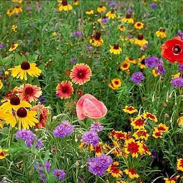Outsidepride Midwest Wildflower Seed Mix - 5 LB