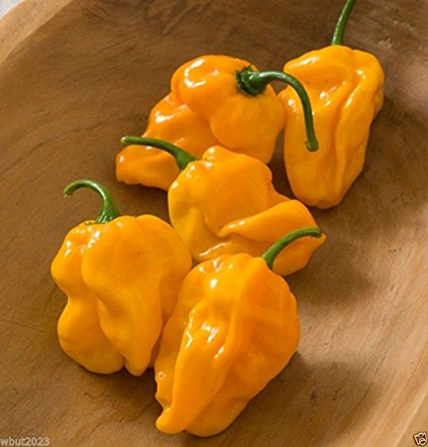 NuMex Suave,Pepper,Habanero,Chili-Orange(OG)Fruity Flavor,A hint of Heat-30 Seed