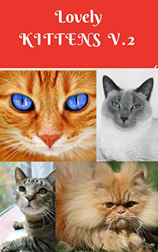 Lovely Kittens V.2: 71 pages large size Photo books, photo books nature, photo books adults, photo books children, photo books kindles (photobook cat) (English Edition)