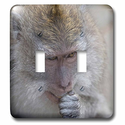Danita Delimont - Primates - Indonesia, Bali. The Monkey Forest of Padangtegal a sacred site. - Light Switch Covers - double toggle switch (lsp_225782_2) by 3dRose