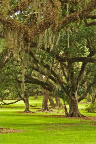 - Massive Oak Trees Draped with Spanish Moss Journal: 150 page lined notebook/diary