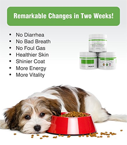 Probiotics for Dogs and Cats with Prebiotic