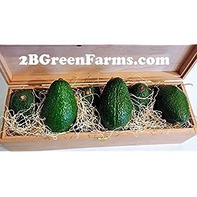 Fresh California Hass Avocados