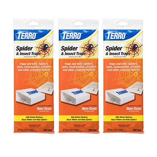 Terro T3206SR 3-Pack Spider & Insect Trap-12 Traps, 3 Pack, White