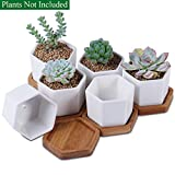 Unibene 2.8 Inch White Ceramic Contemporary Hexagon Cactus Succulents Pots with Bamboo Tray and Drainage Hole, Indoor Bonsai Planters Containers, Decor for Home Office Garden Kitchen - 6 Pack