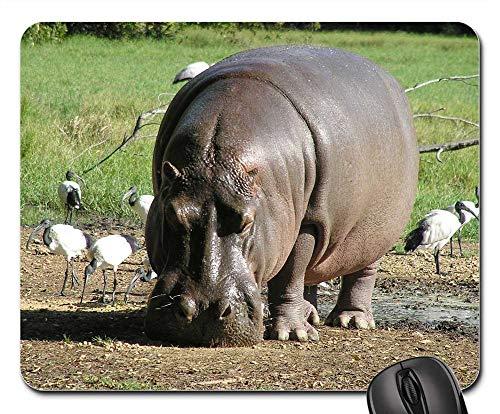 Mouse Pad - Hippo River Hippopotamus Africa Nature Animals