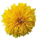 Seeds of Change 01354 Certified Organic Seed, Sunshine Sunflower