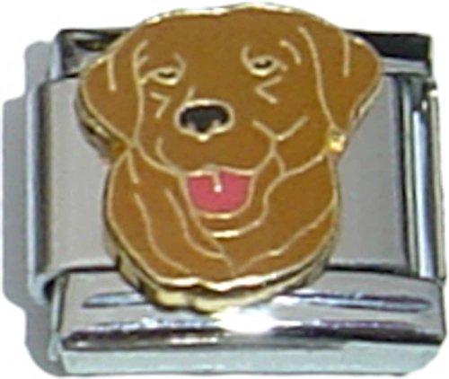 Modular Chocolate (Chocolate Lab Italian Charm)
