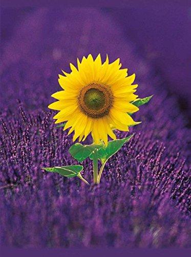 Sunflower: Blank Book large (Blankbook (RB906))