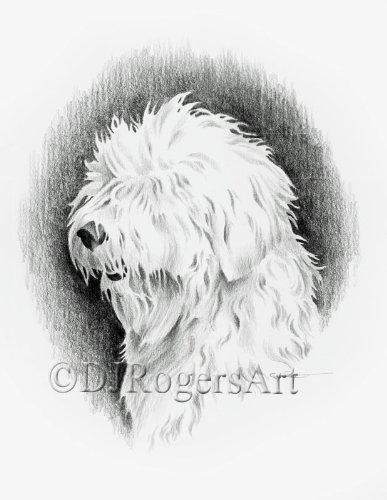 Old English Sheepdog Pencil Drawing Art Print by Artist DJ Rogers