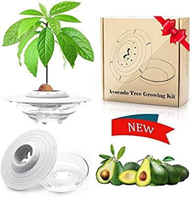 Amazon Com Avocado Plant Starter Tray Ibayx Avocado Tree Growing Plant Bowl Garden Germinator Cool Garden Gifts For Women And Family Kitchen Dining
