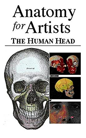 Amazon.com: Anatomy for Artists - The Human Head: Larry Withers ...
