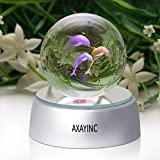 AXAYINC Dolphin 3D Crystal Ball LED Night Light with Base, Puzzle Dolphin Advanced Laser Engraving, Ideal Present for Kids, Friends, Perfect for Home, Offices, Bars Decor etc. - 50mm
