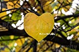 Love of Autumn, Heart Leaf, Fall Foliage, Art Photography, Print, Home, Wall Decor, Sizes Available from 5x7 to 20x30.