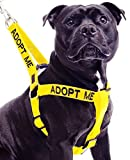 Dexil Limited Adopt ME Yellow Color Coded L-XL