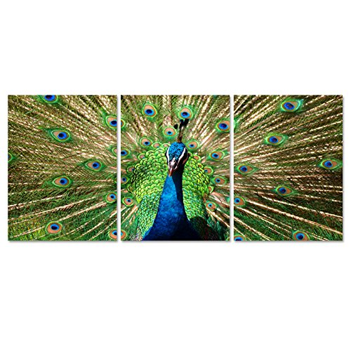 Vivid Color Peacock Feather 3 Piece Modern Stretched and Framed Giclee Prints Artwork Green Animals Pictures Paintings on Canvas Wall Art for Living Room Bedroom Home Decorations (12x16inchx3pcs) ()