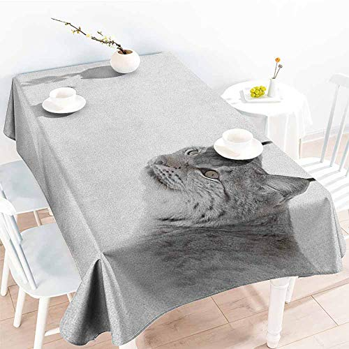 (familytaste Hunting,Table Cover for Dinner Kitchen Lynx in The Central Norway Wild Cat North Cold Snowy Mountain Carnivore Predator 54