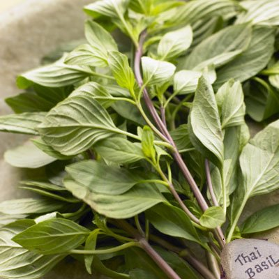 Fresh Basil (Thai Sweet Basil Fresh 14 Oz)