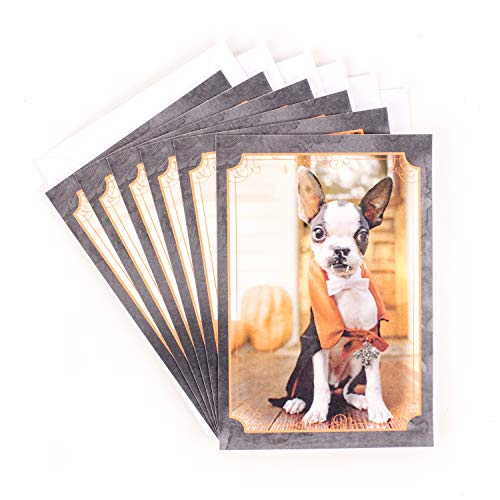Hallmark Halloween Cards, Dog in Vampire Costume (6 Cards with -