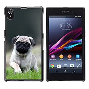 Hot Style Cell Phone PC Hard Case Cover // M00100558 animals little pug cute // Sony Xperia Z1 L39