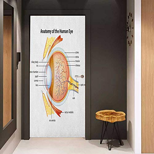 Onefzc Door Wall Sticker Educational Human Eye Anatomy Cornea Iris Pupils Optic Nerves Graphic Print Mural Wallpaper W30 x H80 Coral Mustard Baby Blue