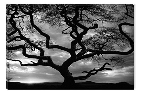 Startonight Canvas Wall Art Black and White Abstract Deep in to the Forest Trees Nature Landscape, Dual View Surprise Artwork Framed Wall Art 100% Original Art Painting 31.5 x 47.2 inch by Startonight