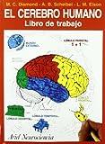 img - for El cerebro humano book / textbook / text book