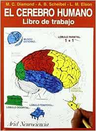 El cerebro humano: Libro de trabajo (Ariel Ciencias