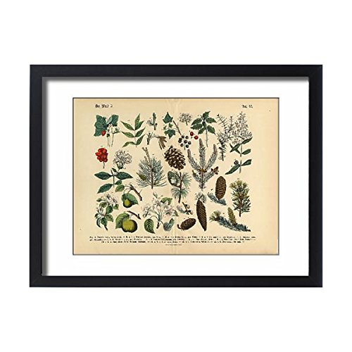 Victorian Pine Bracket - Media Storehouse Framed 24x18 Print of Forest and Fruit Trees and Plants, Victorian Botanical Illustration (15098029)