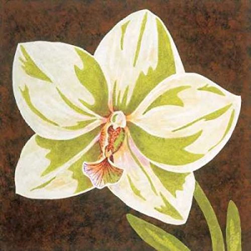 Surabaya Orchid Petites B Poster Print by Judy Shelby (12 x 12)